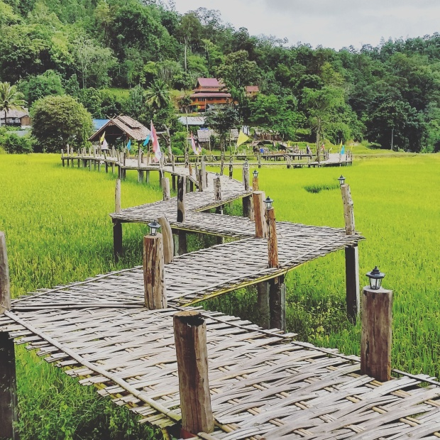 the bamboo bridge stretches over rice fields