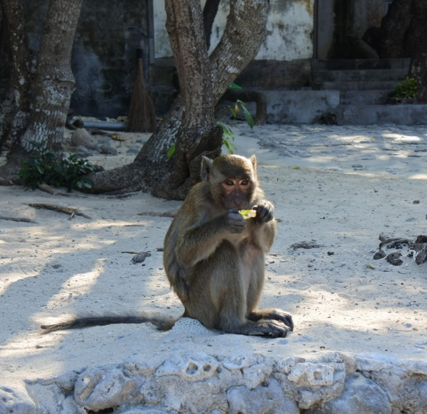 Monkey's look cute but they do not want to be your friend!